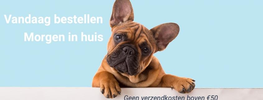 Dierenwinkel Hoofddorp Franse Bulldog Shop